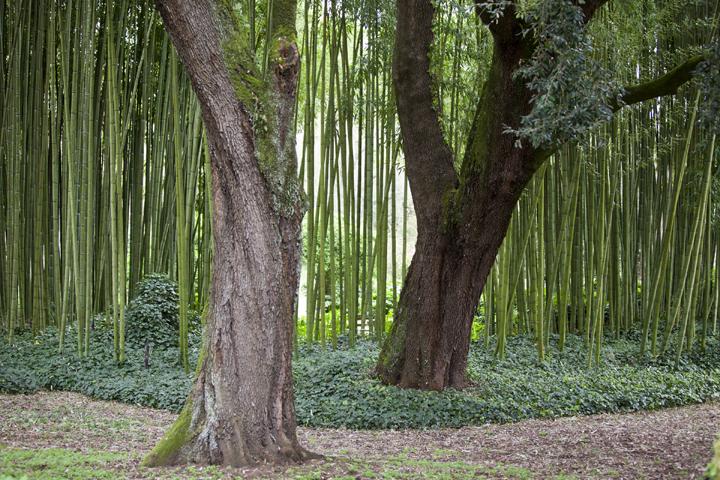 giardini_di_nifa_4